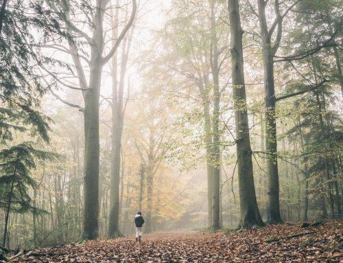 Leaving The Battlefield Of Divorce