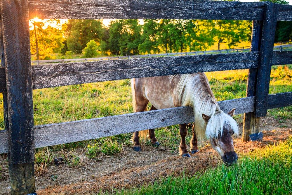 donkey reaching through fence to greener grass